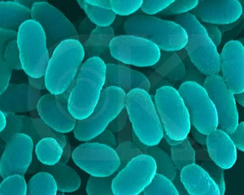 eubakteriya-vo-vlagalishe